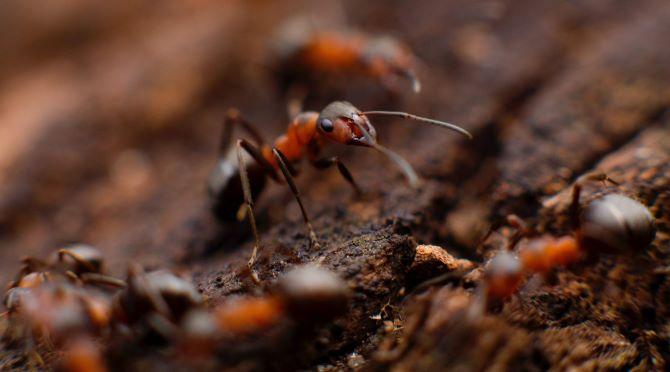 Formigas e controle de pragas urbanas